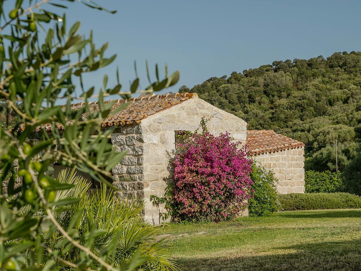 Balajana winefarm
